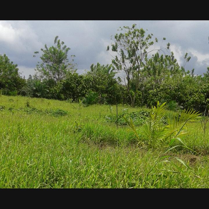 Lokasi percetakan sawah di desa Ompi yang Beralih Fungsi